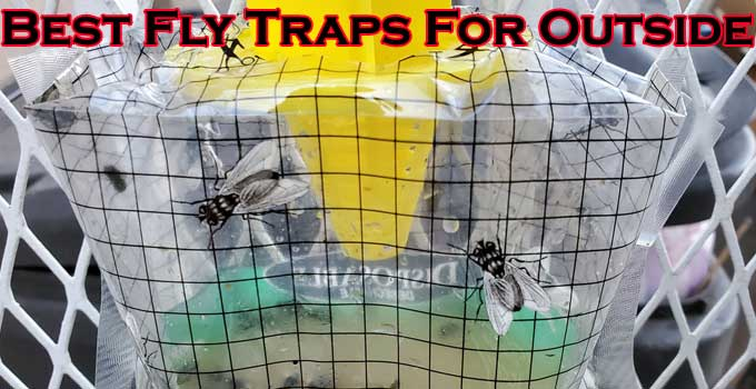 Best Fly Traps For Outside